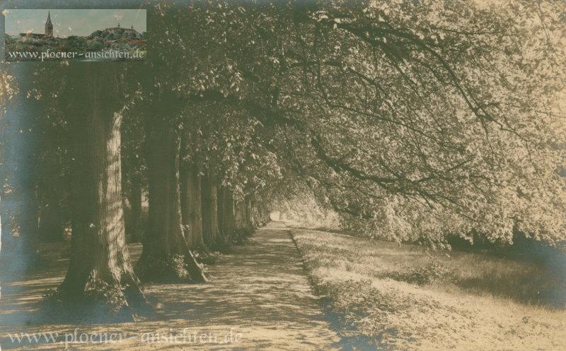 Allee im Schlossgarten